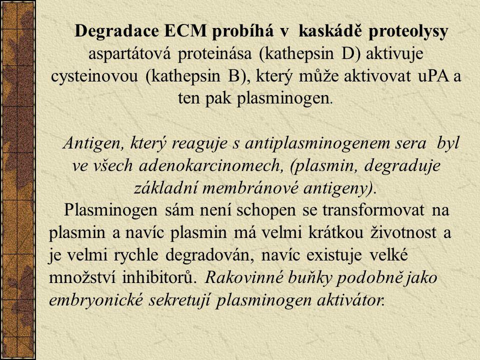 Degradace ECM probíhá v kaskádě proteolysy aspartátová proteinása (kathepsin D) aktivuje cysteinovou (kathepsin B), který může aktivovat uPA a ten pak plasminogen.