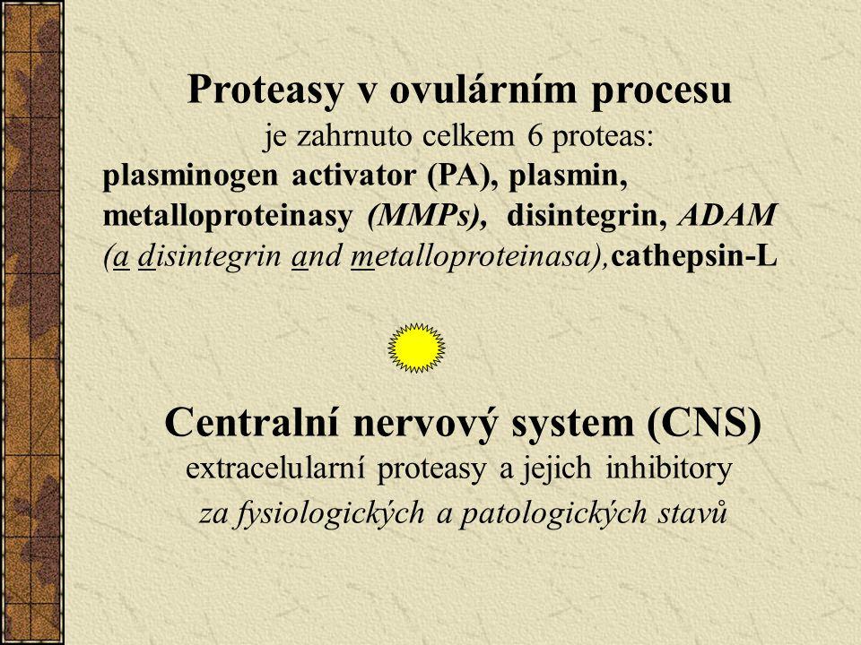 Proteasy v ovulárním procesu