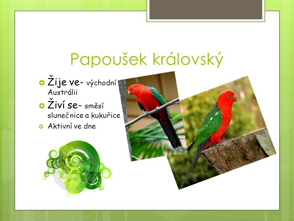 Papoušek královský Žije ve- východní Austrálii