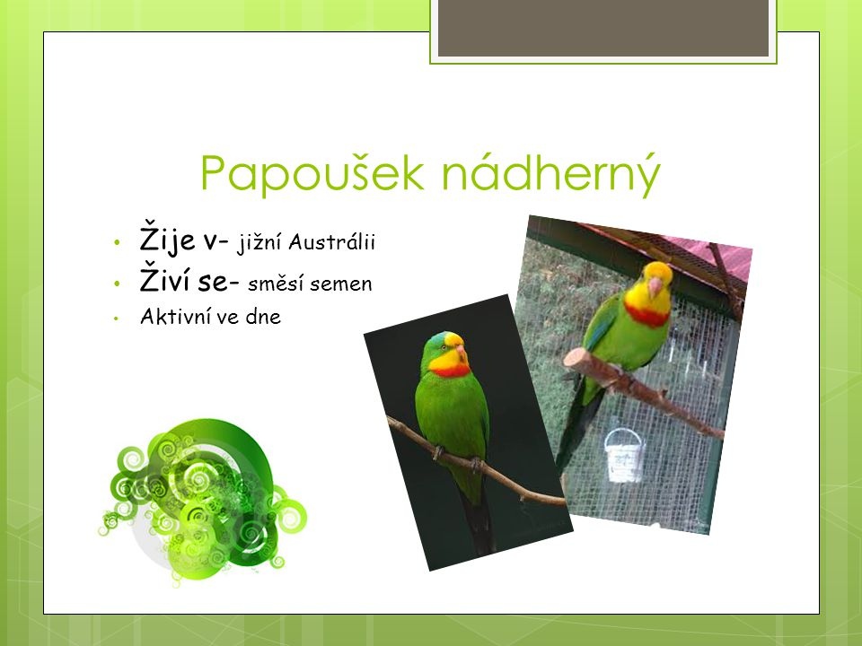 Papoušek nádherný Žije v- jižní Austrálii Živí se- směsí semen