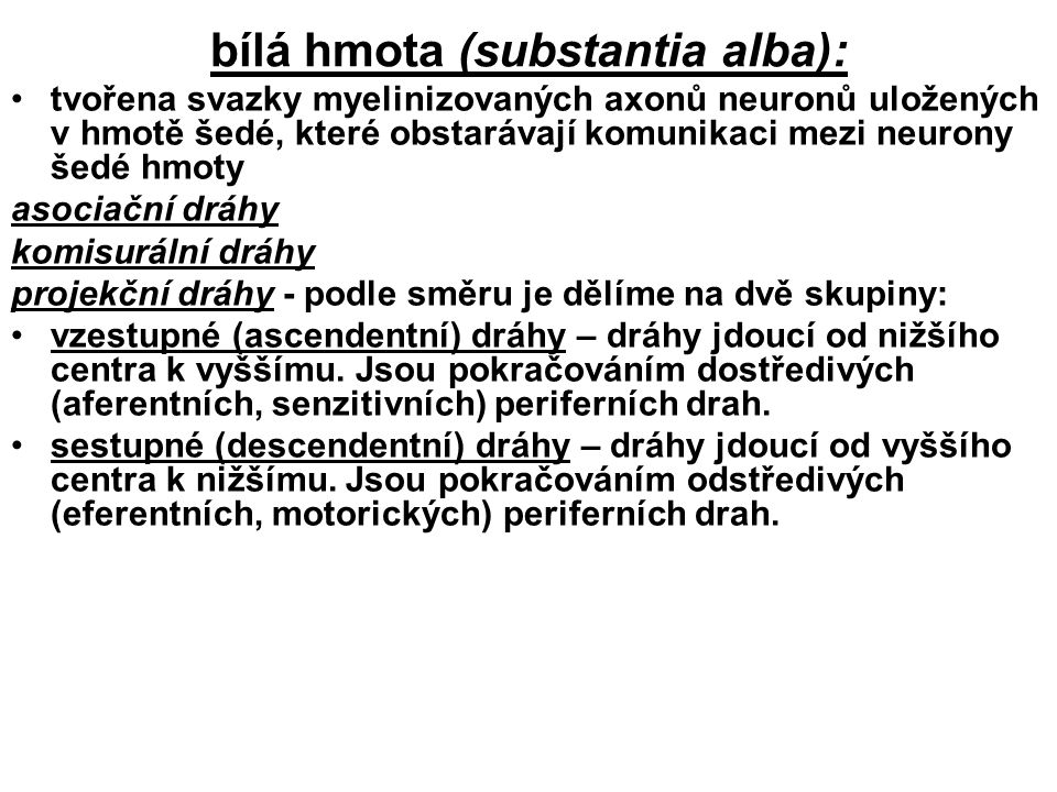 bílá hmota (substantia alba):