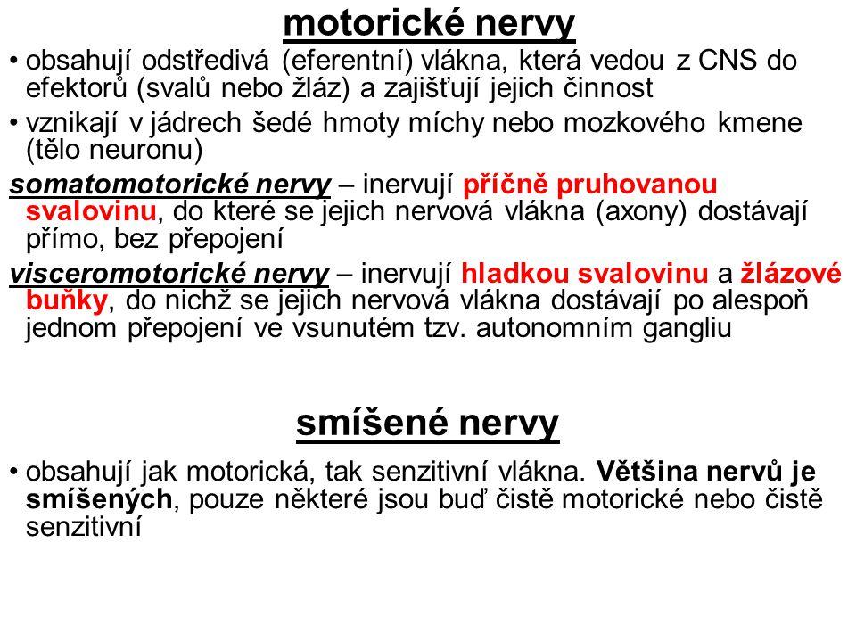 motorické nervy smíšené nervy