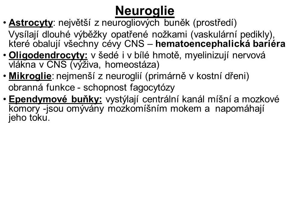 Neuroglie Astrocyty: největší z neurogliových buněk (prostředí)