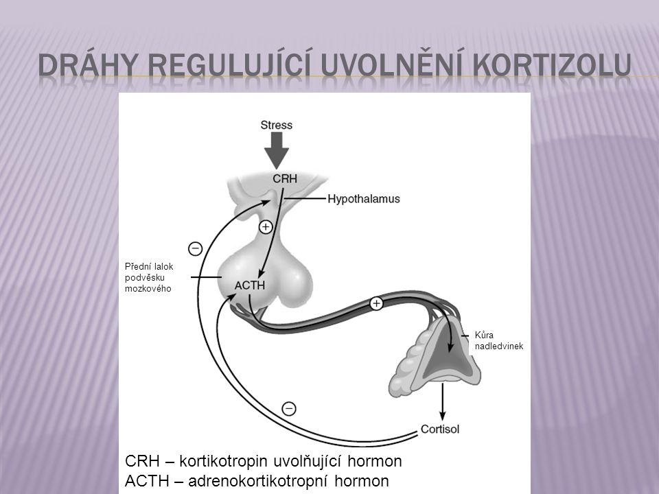 Dráhy regulující uvolnění kortizolu