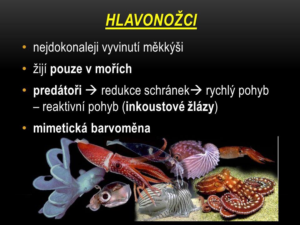 hlavonožci nejdokonaleji vyvinutí měkkýši žijí pouze v mořích