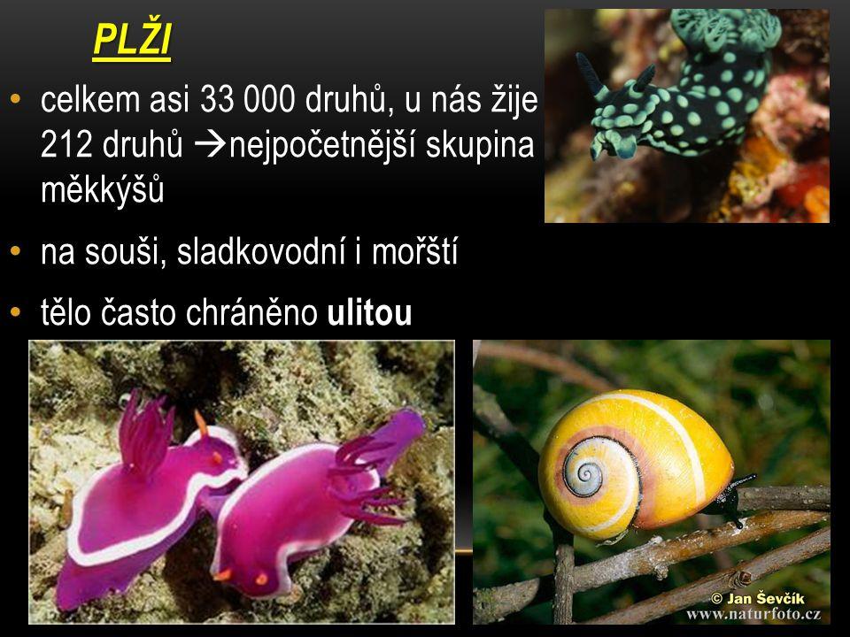 PLŽI celkem asi 33 000 druhů, u nás žije 212 druhů nejpočetnější skupina měkkýšů. na souši, sladkovodní i mořští.