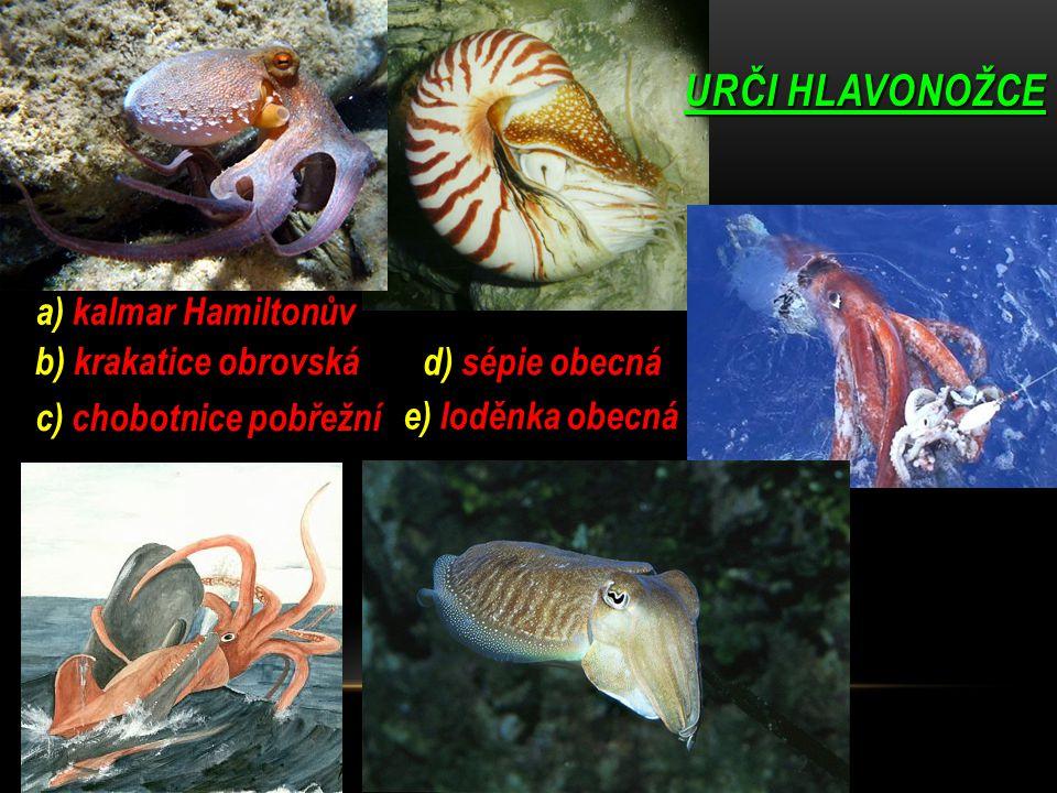 URČI HLAVONOŽCE a) kalmar Hamiltonův b) krakatice obrovská