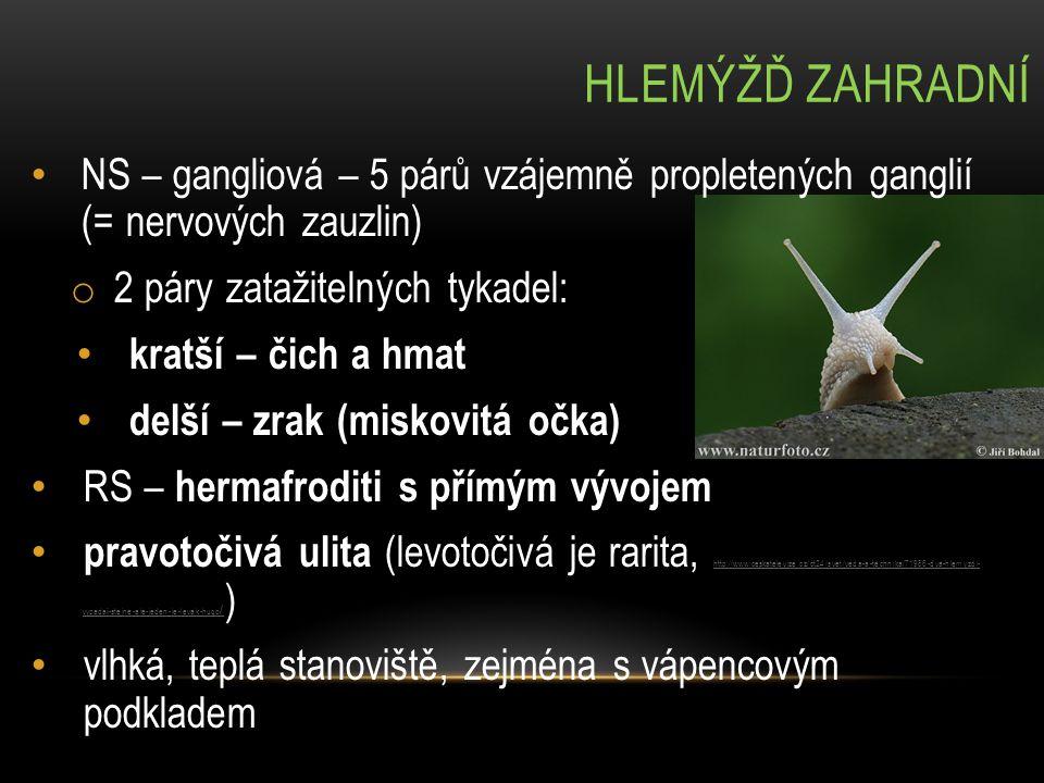 hlemýžď zahradní NS – gangliová – 5 párů vzájemně propletených ganglií (= nervových zauzlin) 2 páry zatažitelných tykadel: