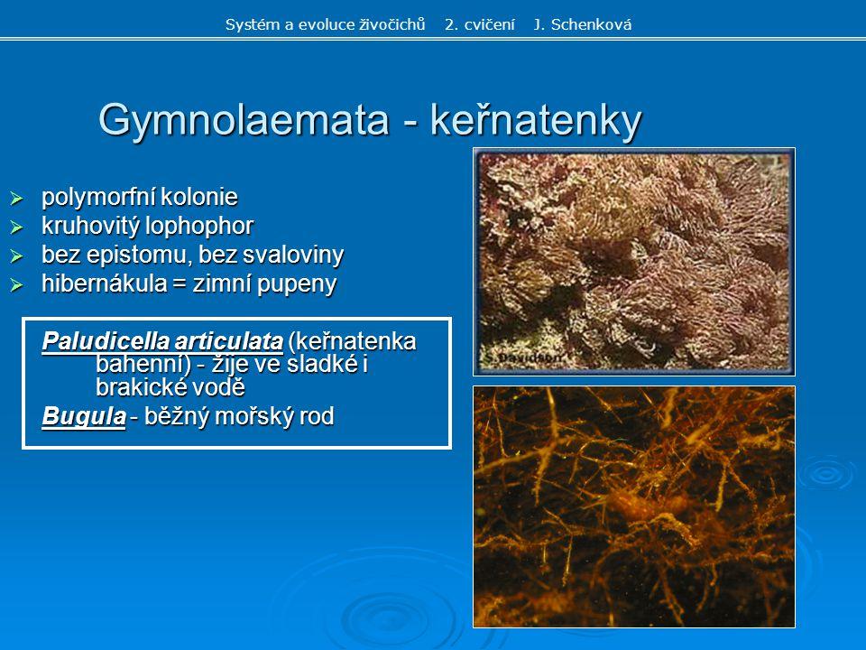 Gymnolaemata - keřnatenky