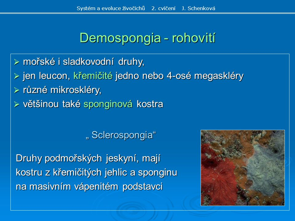 Demospongia - rohovití