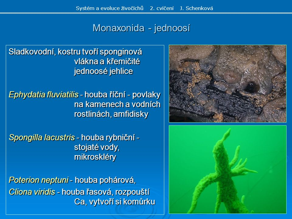 Systém a evoluce živočichů 2. cvičení J. Schenková