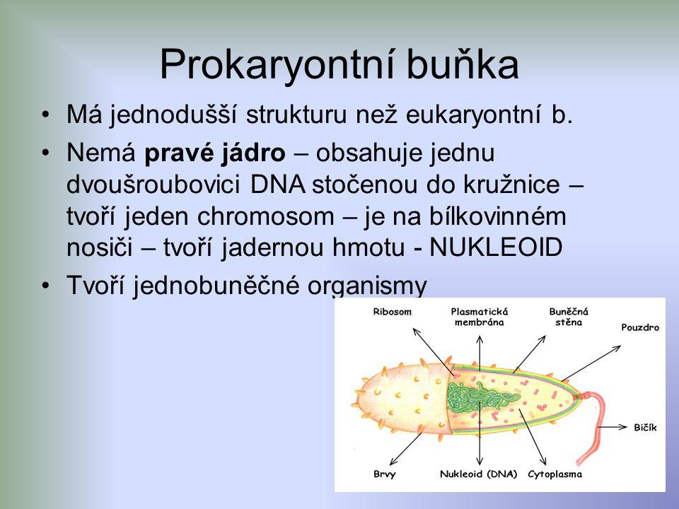 Prokaryontní buňka Má jednodušší strukturu než eukaryontní b.