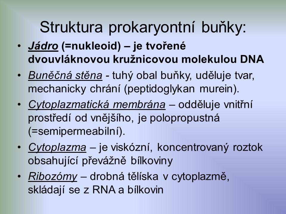 Struktura prokaryontní buňky: