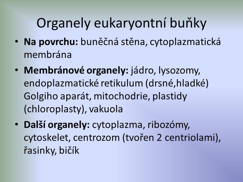 Organely eukaryontní buňky