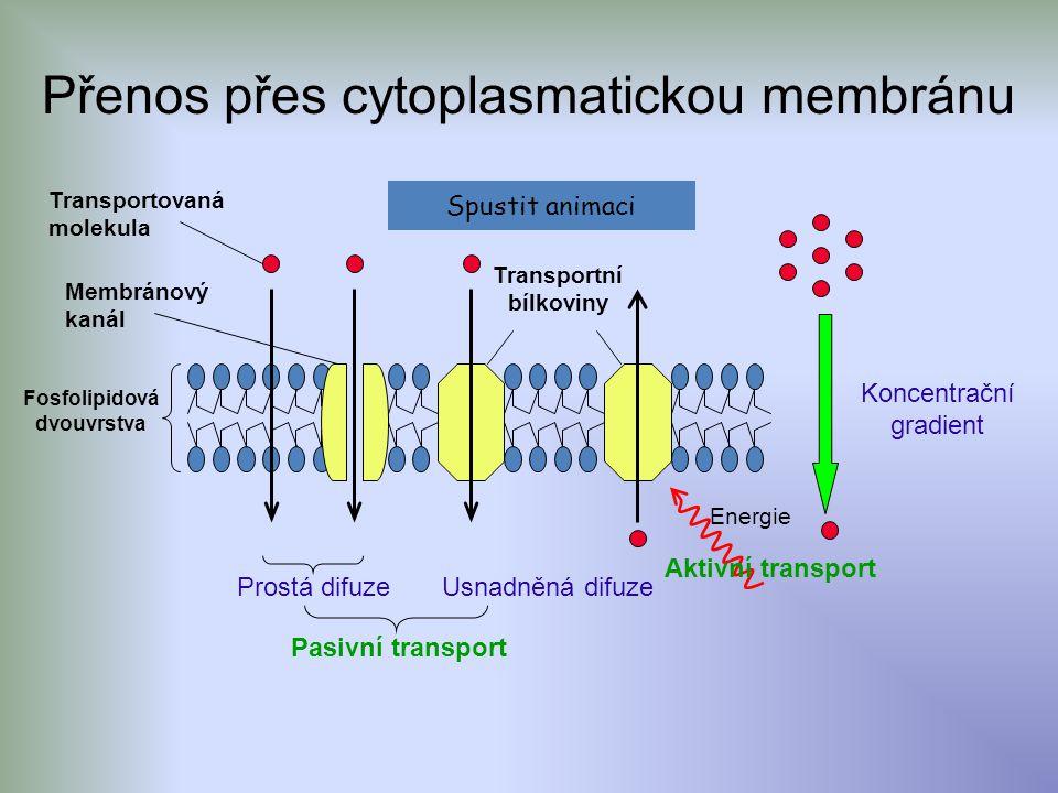 Transportní bílkoviny Fosfolipidová dvouvrstva
