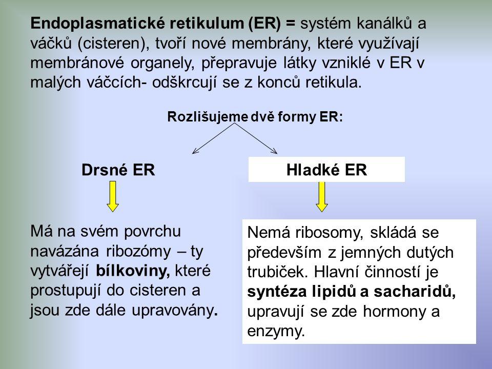 Endoplasmatické retikulum (ER) = systém kanálků a váčků (cisteren), tvoří nové membrány, které využívají membránové organely, přepravuje látky vzniklé v ER v malých váčcích- odškrcují se z konců retikula.