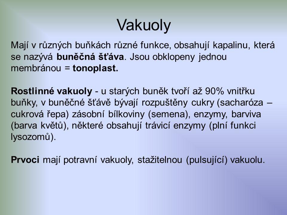 Vakuoly Mají v různých buňkách různé funkce, obsahují kapalinu, která se nazývá buněčná šťáva. Jsou obklopeny jednou membránou = tonoplast.