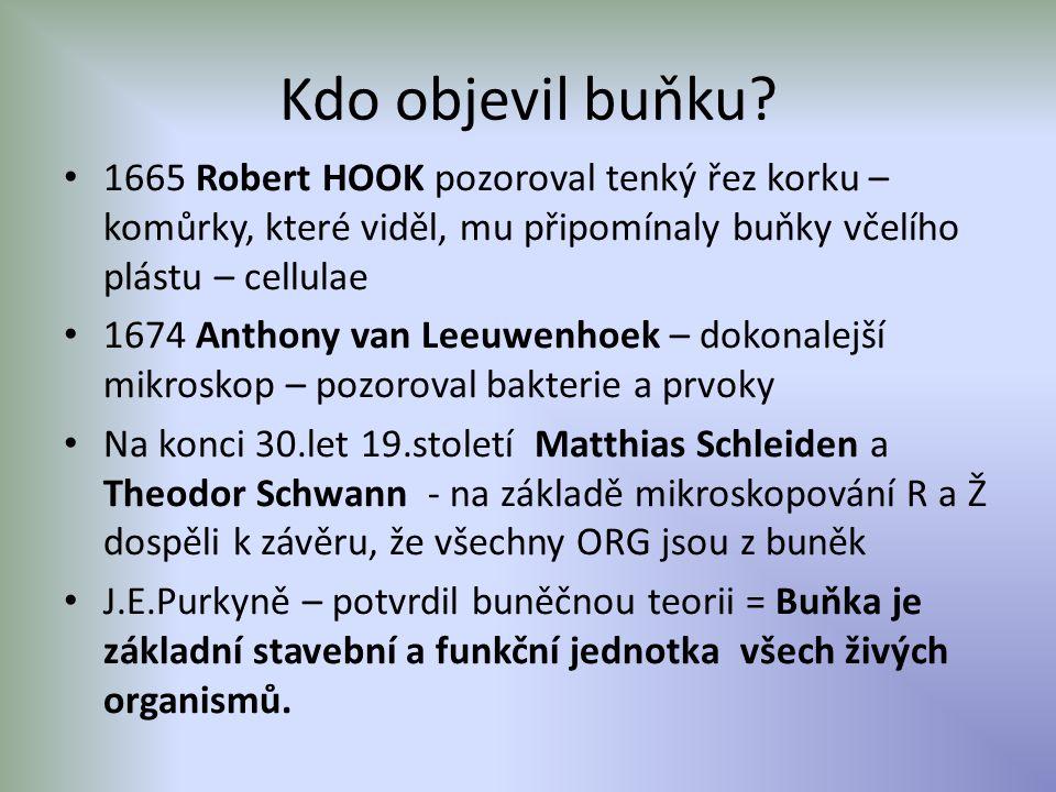 Kdo objevil buňku 1665 Robert HOOK pozoroval tenký řez korku –komůrky, které viděl, mu připomínaly buňky včelího plástu – cellulae.
