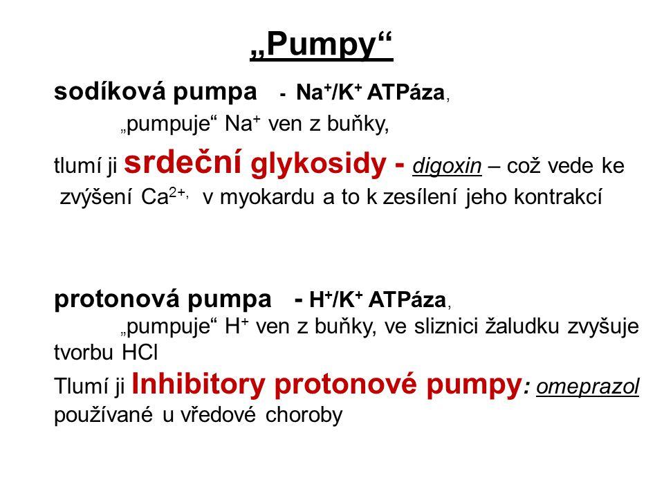 sodíková pumpa - Na+/K+ ATPáza,