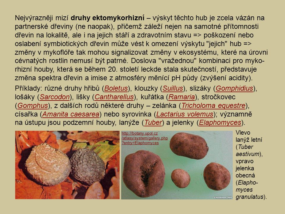 Nejvýrazněji mizí druhy ektomykorhizní – výskyt těchto hub je zcela vázán na partnerské dřeviny (ne naopak), přičemž záleží nejen na samotné přítomnosti dřevin na lokalitě, ale i na jejich stáří a zdravotním stavu => poškození nebo oslabení symbiotických dřevin může vést k omezení výskytu jejich hub => změny v mykoflóře tak mohou signalizovat změny v ekosystému, které na úrovni cévnatých rostlin nemusí být patrné. Doslova vražednou kombinaci pro myko-rhizní houby, která se během 20. století leckde stala skutečností, představuje změna spektra dřevin a imise z atmosféry měnící pH půdy (zvýšení acidity).