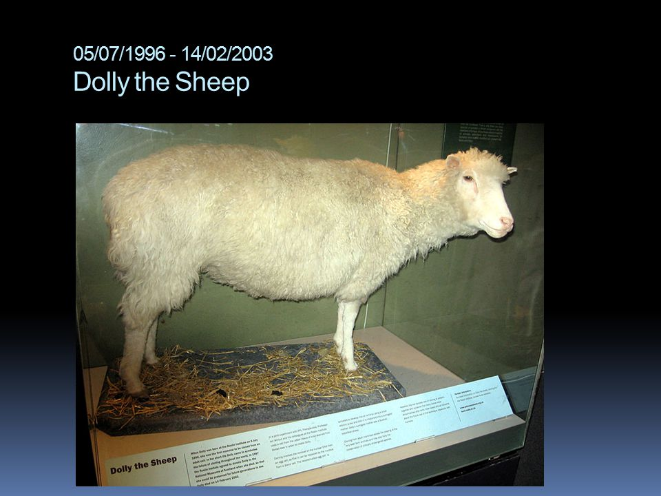 05/07/1996 - 14/02/2003 Dolly the Sheep