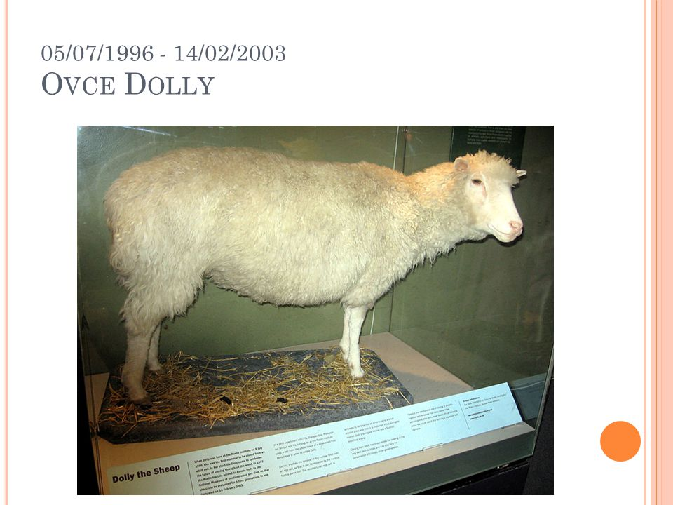 05/07/1996 - 14/02/2003 Ovce Dolly