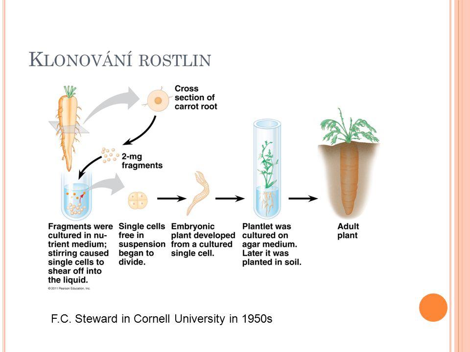 Klonování rostlin F.C. Steward in Cornell University in 1950s