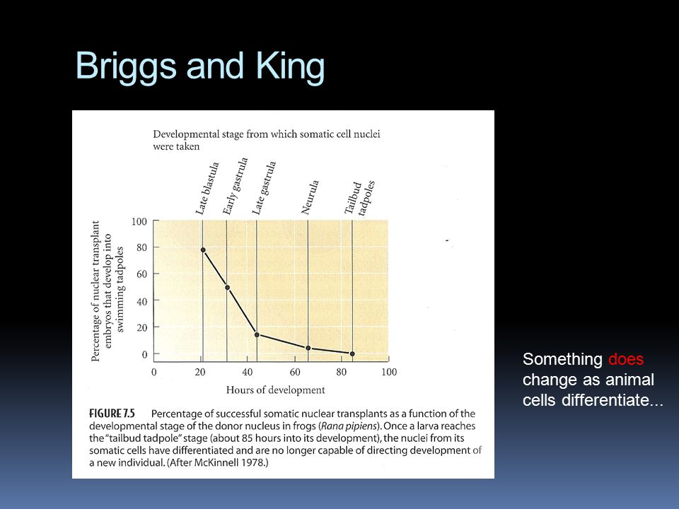 Briggs and King Something does change as animal cells differentiate...