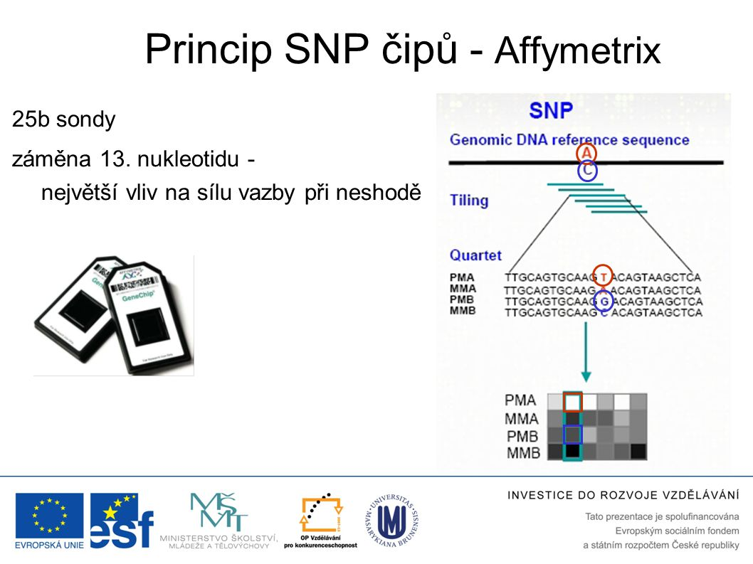 Princip SNP čipů - Affymetrix