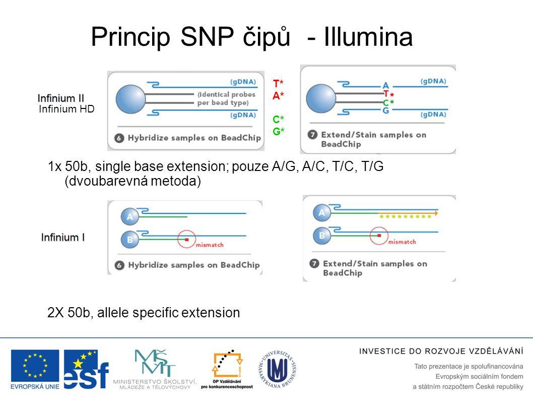 Princip SNP čipů - Illumina