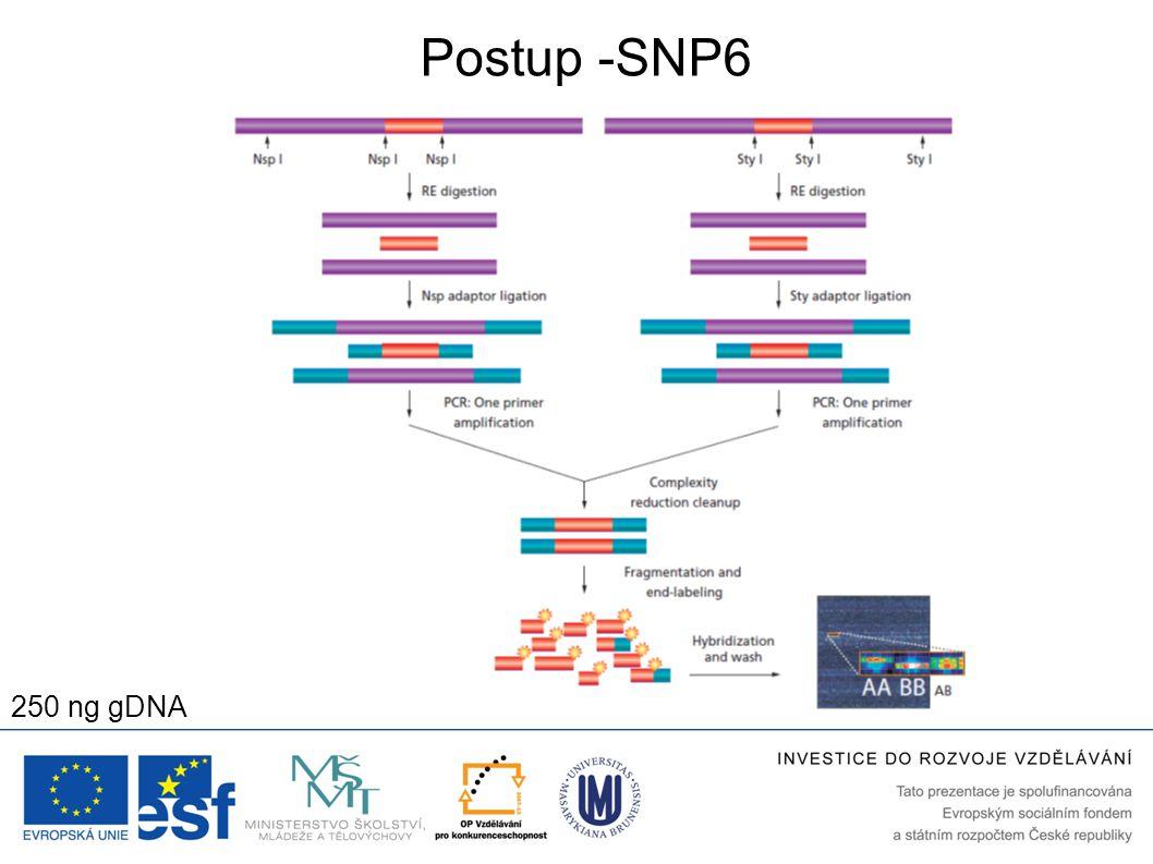 Postup -SNP6 250 ng gDNA