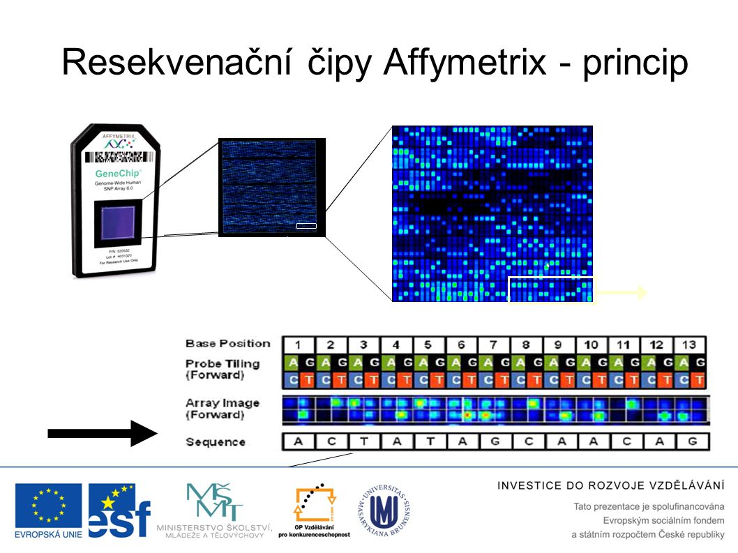 Resekvenační čipy Affymetrix - princip