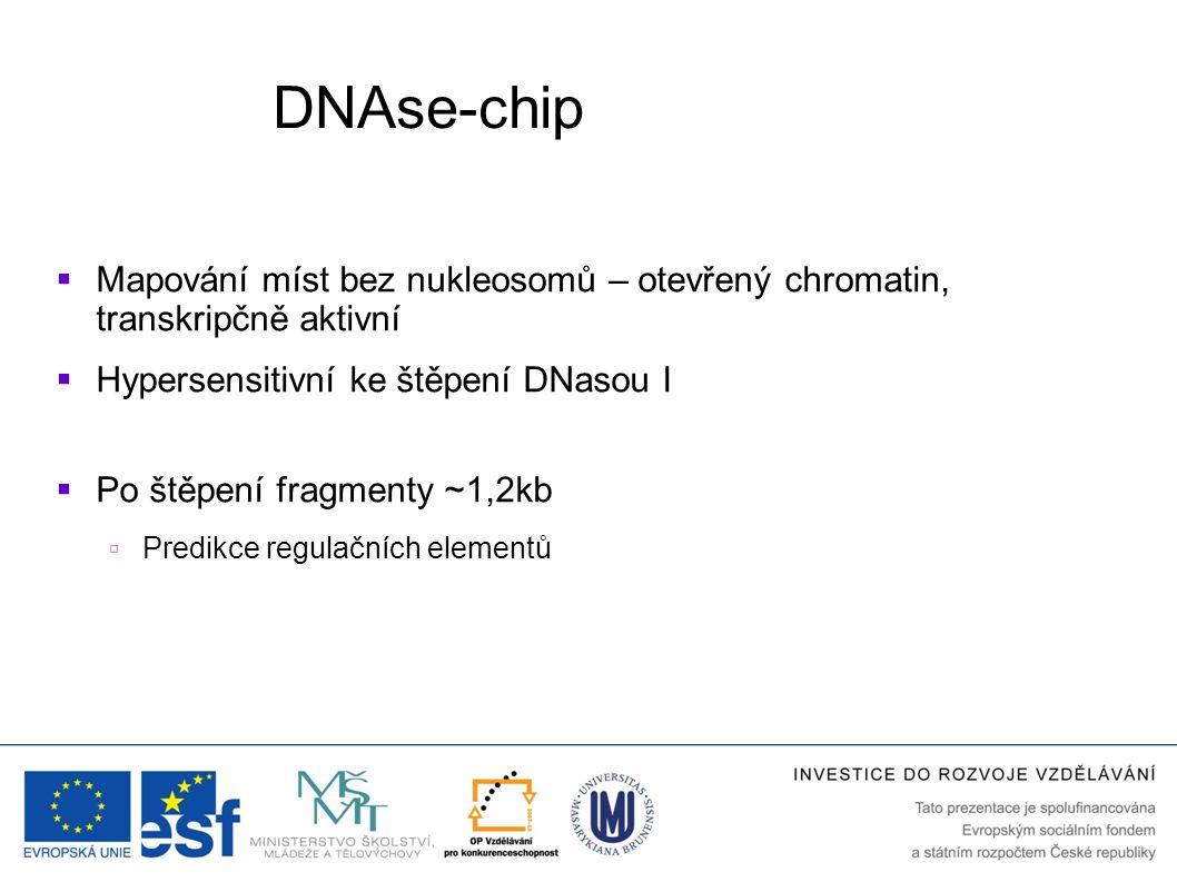 DNAse-chip Mapování míst bez nukleosomů – otevřený chromatin, transkripčně aktivní. Hypersensitivní ke štěpení DNasou I.