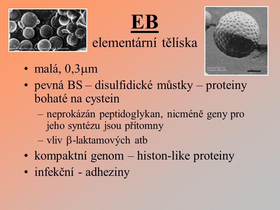 EB elementární tělíska