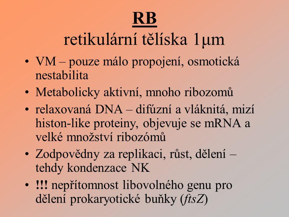 RB retikulární tělíska 1μm