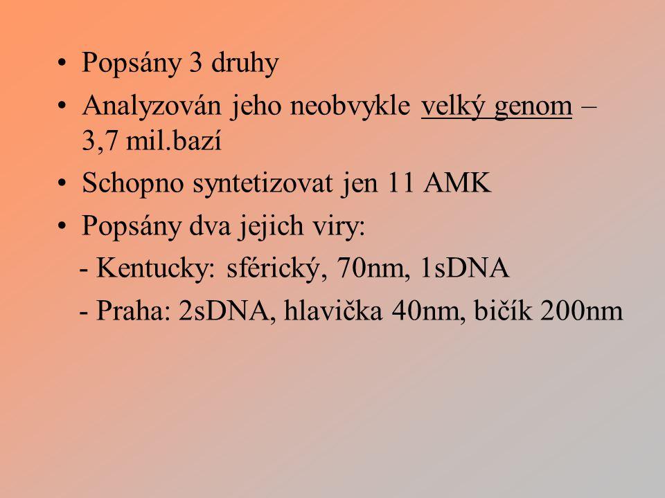 Popsány 3 druhy Analyzován jeho neobvykle velký genom – 3,7 mil.bazí. Schopno syntetizovat jen 11 AMK.