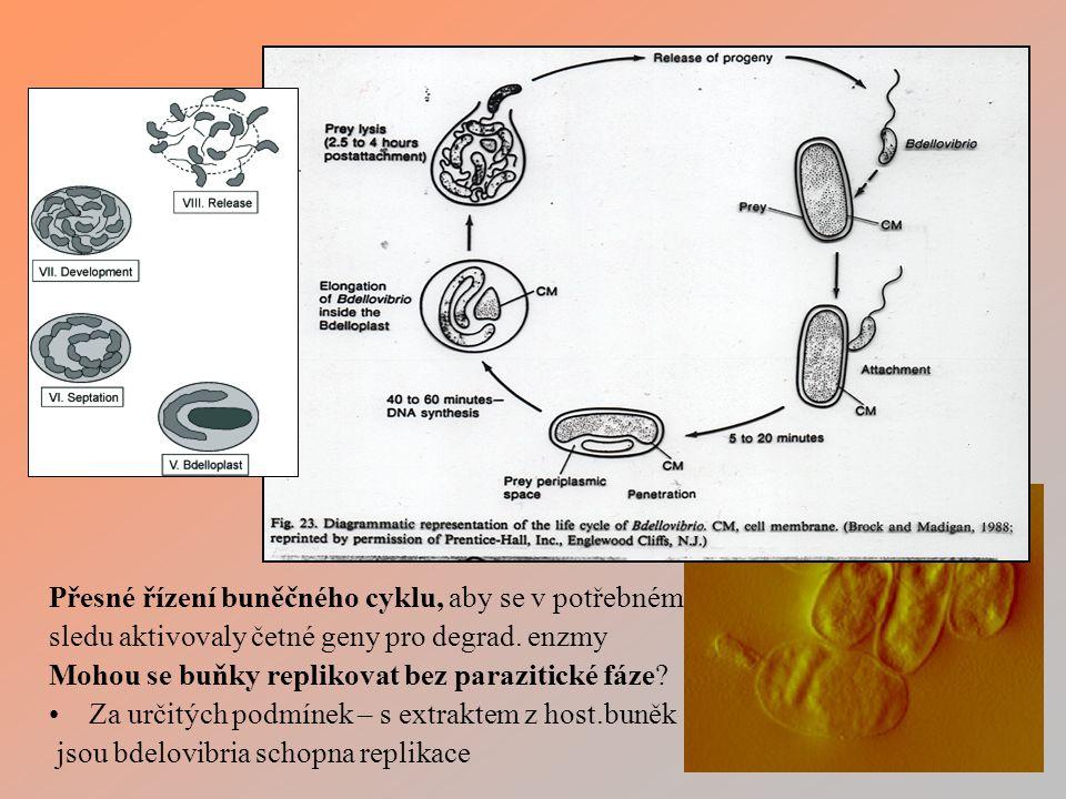 Přesné řízení buněčného cyklu, aby se v potřebném