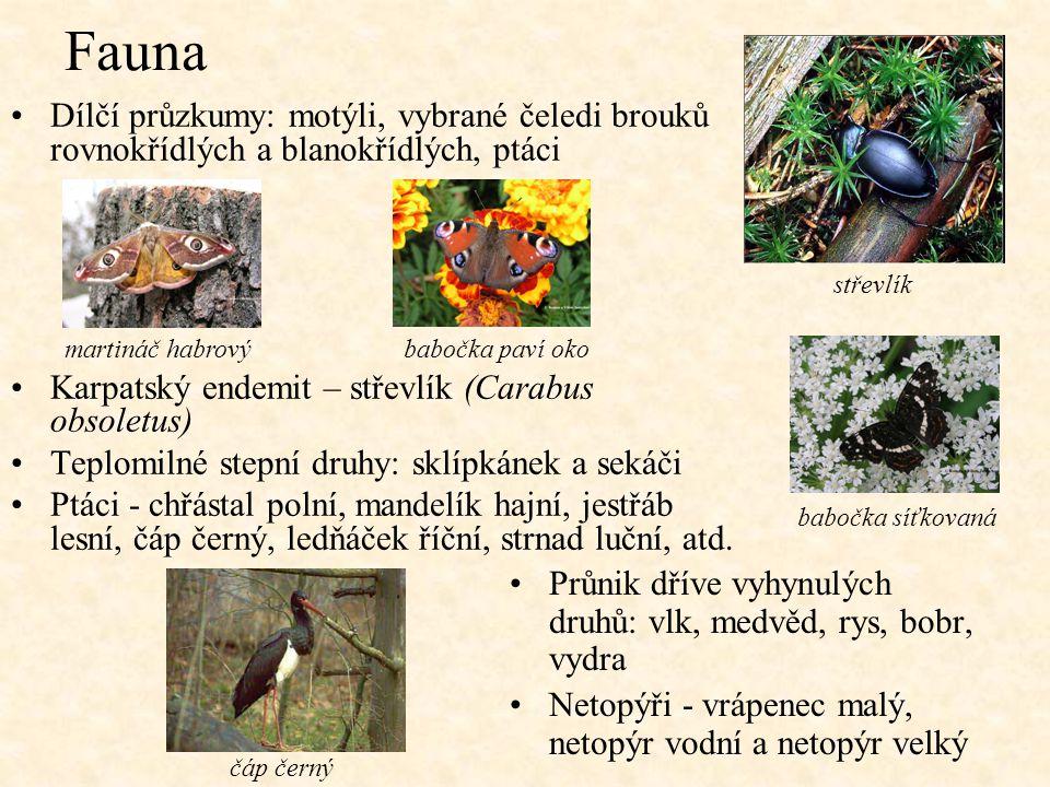 Fauna Dílčí průzkumy: motýli, vybrané čeledi brouků rovnokřídlých a blanokřídlých, ptáci. Karpatský endemit – střevlík (Carabus obsoletus)