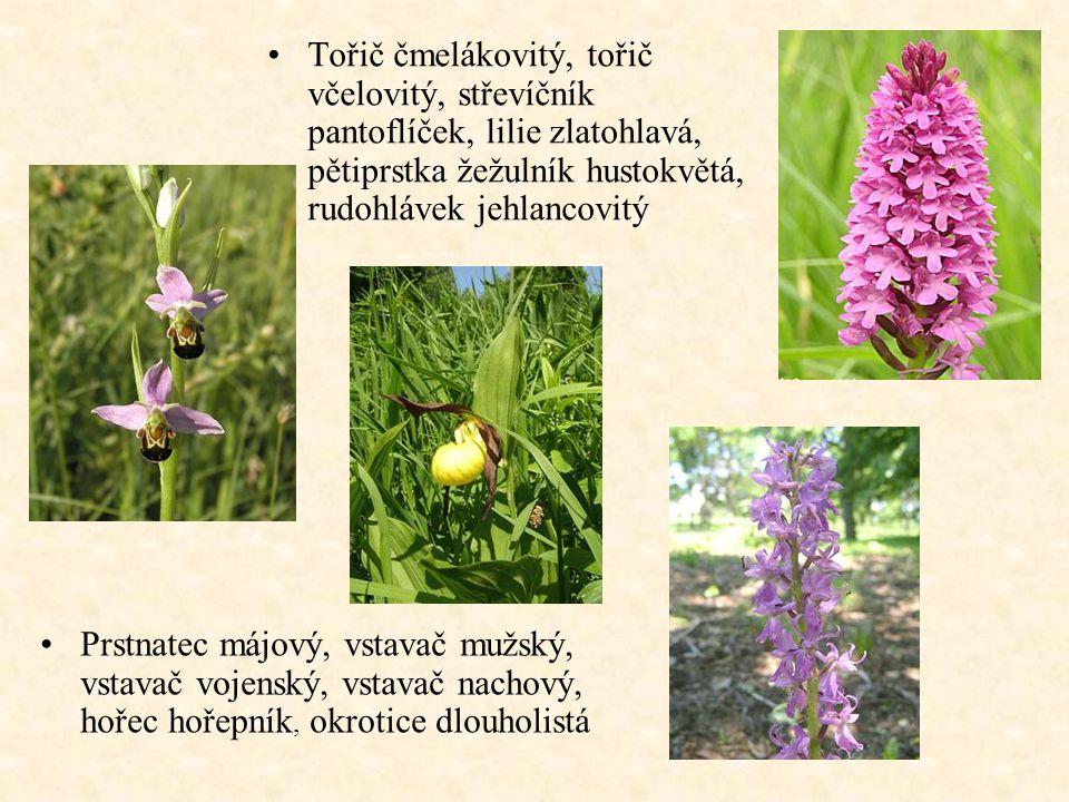 Tořič čmelákovitý, tořič včelovitý, střevíčník pantoflíček, lilie zlatohlavá, pětiprstka žežulník hustokvětá, rudohlávek jehlancovitý