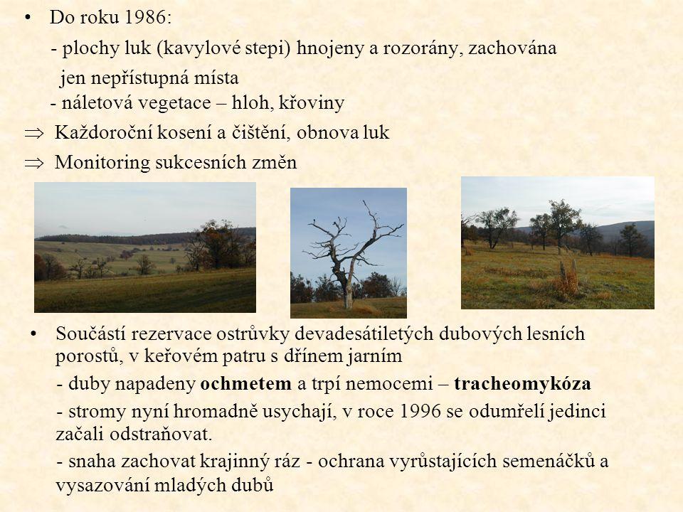 Do roku 1986: - plochy luk (kavylové stepi) hnojeny a rozorány, zachována.