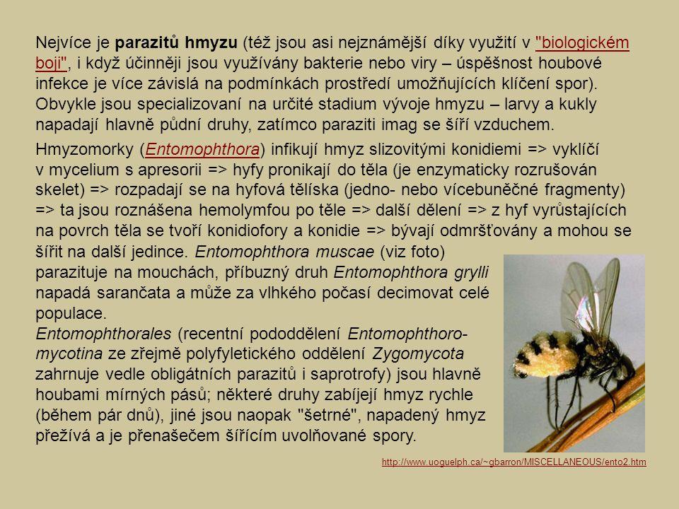 Nejvíce je parazitů hmyzu (též jsou asi nejznámější díky využití v biologickém boji , i když účinněji jsou využívány bakterie nebo viry – úspěšnost houbové infekce je více závislá na podmínkách prostředí umožňujících klíčení spor). Obvykle jsou specializovaní na určité stadium vývoje hmyzu – larvy a kukly napadají hlavně půdní druhy, zatímco paraziti imag se šíří vzduchem.