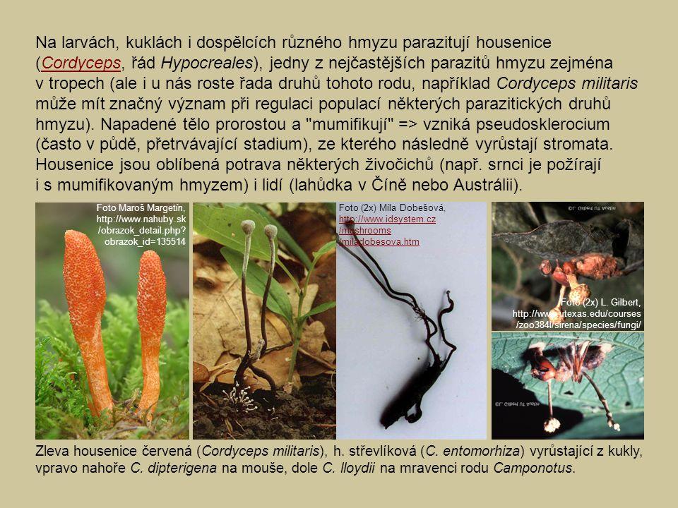 Na larvách, kuklách i dospělcích různého hmyzu parazitují housenice (Cordyceps, řád Hypocreales), jedny z nejčastějších parazitů hmyzu zejména v tropech (ale i u nás roste řada druhů tohoto rodu, například Cordyceps militaris může mít značný význam při regulaci populací některých parazitických druhů hmyzu). Napadené tělo prorostou a mumifikují => vzniká pseudosklerocium (často v půdě, přetrvávající stadium), ze kterého následně vyrůstají stromata. Housenice jsou oblíbená potrava některých živočichů (např. srnci je požírají i s mumifikovaným hmyzem) i lidí (lahůdka v Číně nebo Austrálii).