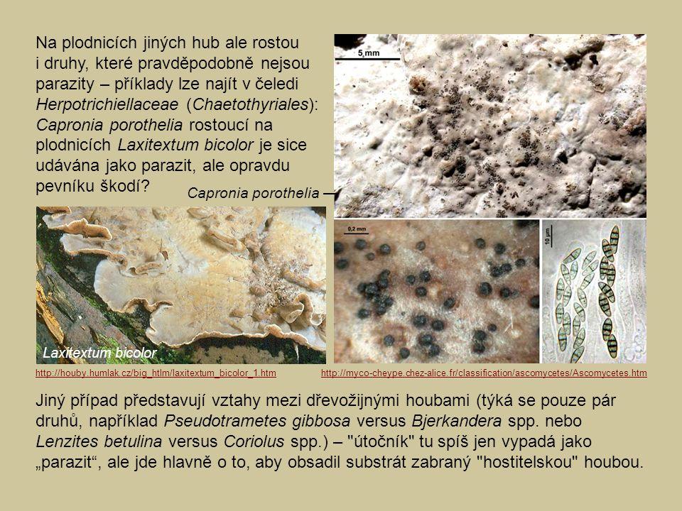 Na plodnicích jiných hub ale rostou i druhy, které pravděpodobně nejsou parazity – příklady lze najít v čeledi Herpotrichiellaceae (Chaetothyriales): Capronia porothelia rostoucí na plodnicích Laxitextum bicolor je sice udávána jako parazit, ale opravdu pevníku škodí