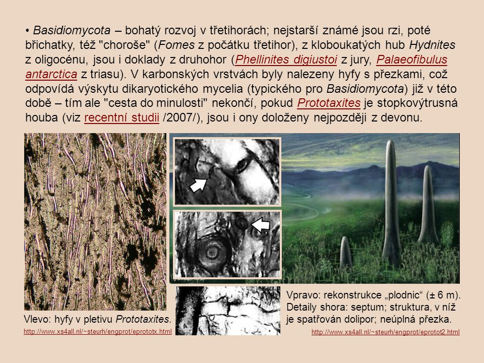 • Basidiomycota – bohatý rozvoj v třetihorách; nejstarší známé jsou rzi, poté břichatky, též choroše (Fomes z počátku třetihor), z kloboukatých hub Hydnites z oligocénu, jsou i doklady z druhohor (Phellinites digiustoi z jury, Palaeofibulus antarctica z triasu). V karbonských vrstvách byly nalezeny hyfy s přezkami, což odpovídá výskytu dikaryotického mycelia (typického pro Basidiomycota) již v této době – tím ale cesta do minulosti nekončí, pokud Prototaxites je stopkovýtrusná houba (viz recentní studii /2007/), jsou i ony doloženy nejpozději z devonu.