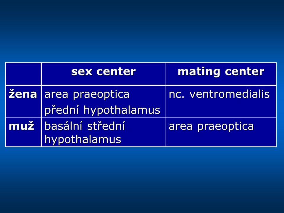 sex center mating center. žena. area praeoptica. přední hypothalamus. nc. ventromedialis. muž.