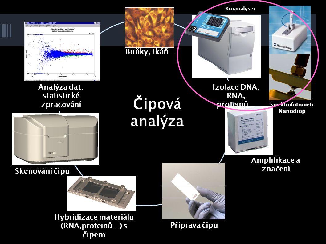 Čipová analýza Buňky, tkáň… Analýza dat, statistické zpracování