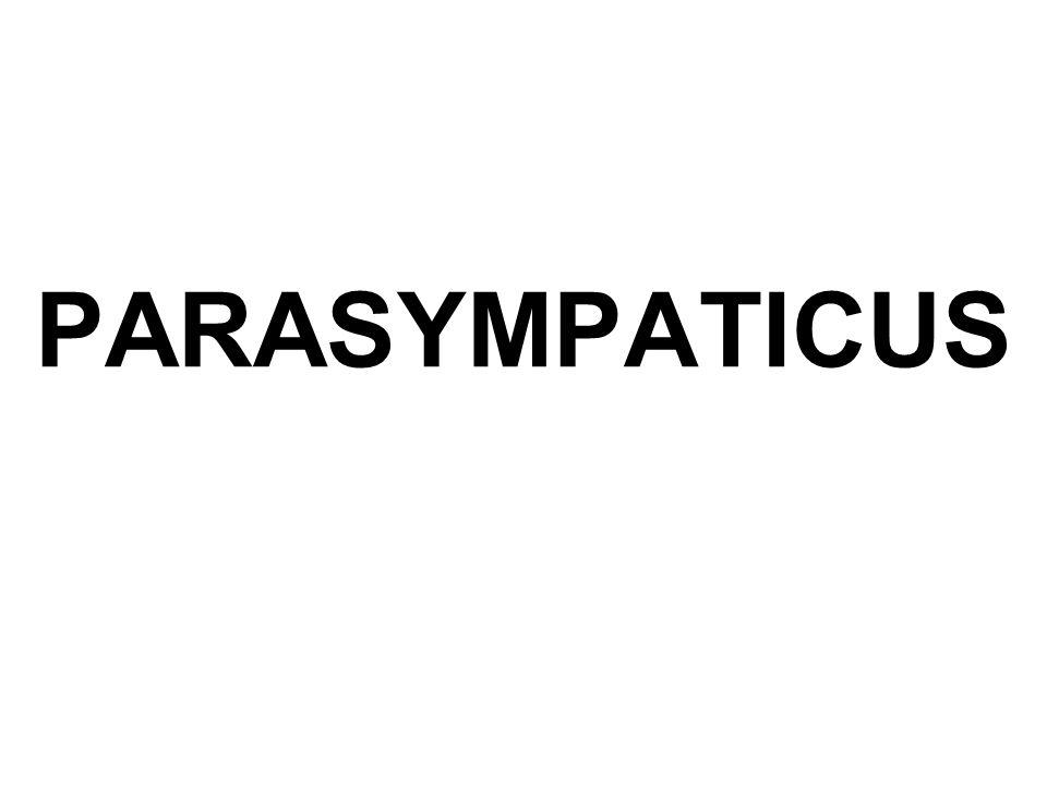 PARASYMPATICUS