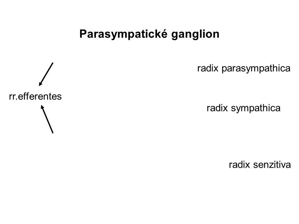 Parasympatické ganglion
