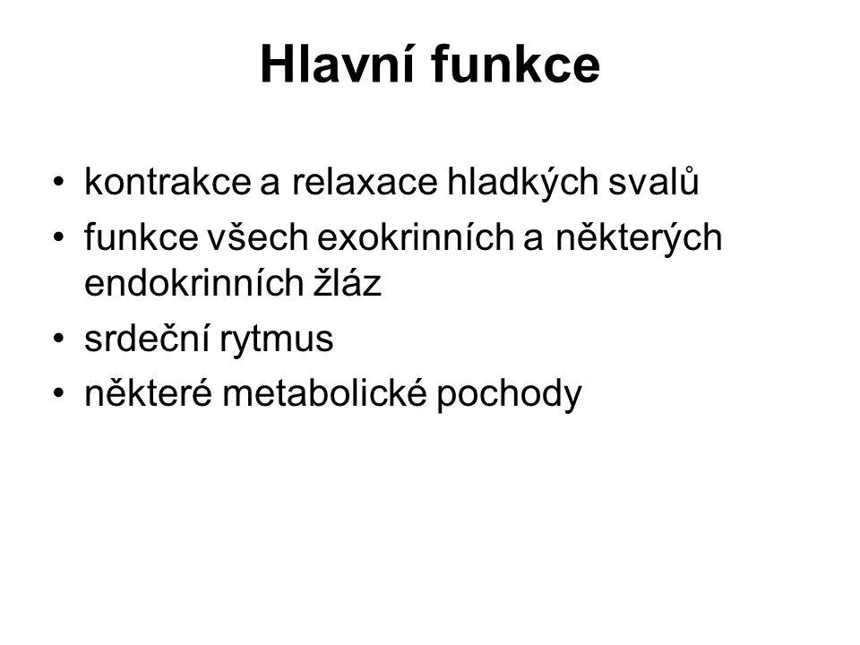 Hlavní funkce kontrakce a relaxace hladkých svalů