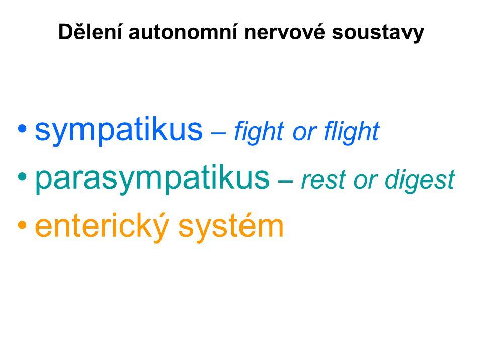 Dělení autonomní nervové soustavy